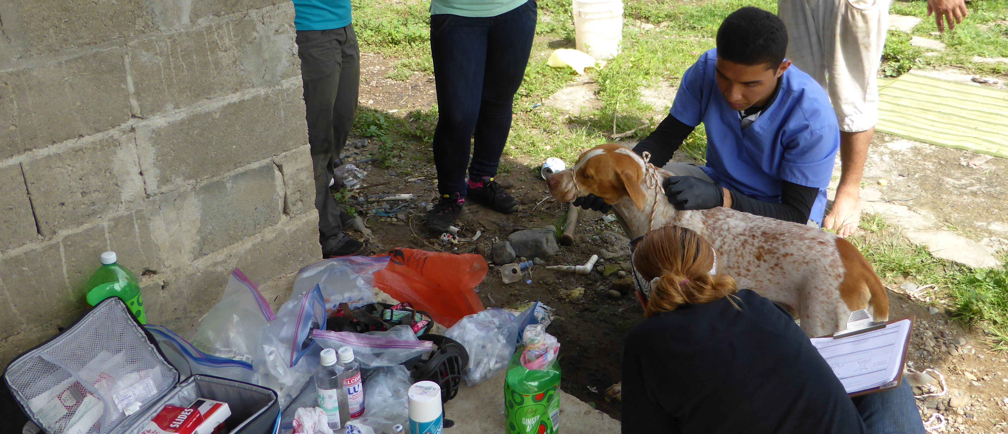 Members of the zoonotic disease research team take blood samples from a dog