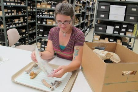 Zooarchaeology Lab Work